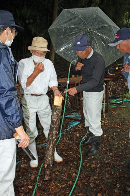 採取した原木を確認する生産者ら